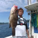 """White mottled grouper """"shirobuchi hata"""" on pink octopus"""