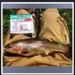 rainbow on pin worm 20150605
