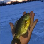 bluegill ice fishing white wax