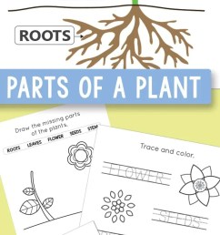 Free Printable Parts of a Plant Worksheets - itsybitsyfun.com [ 1800 x 700 Pixel ]