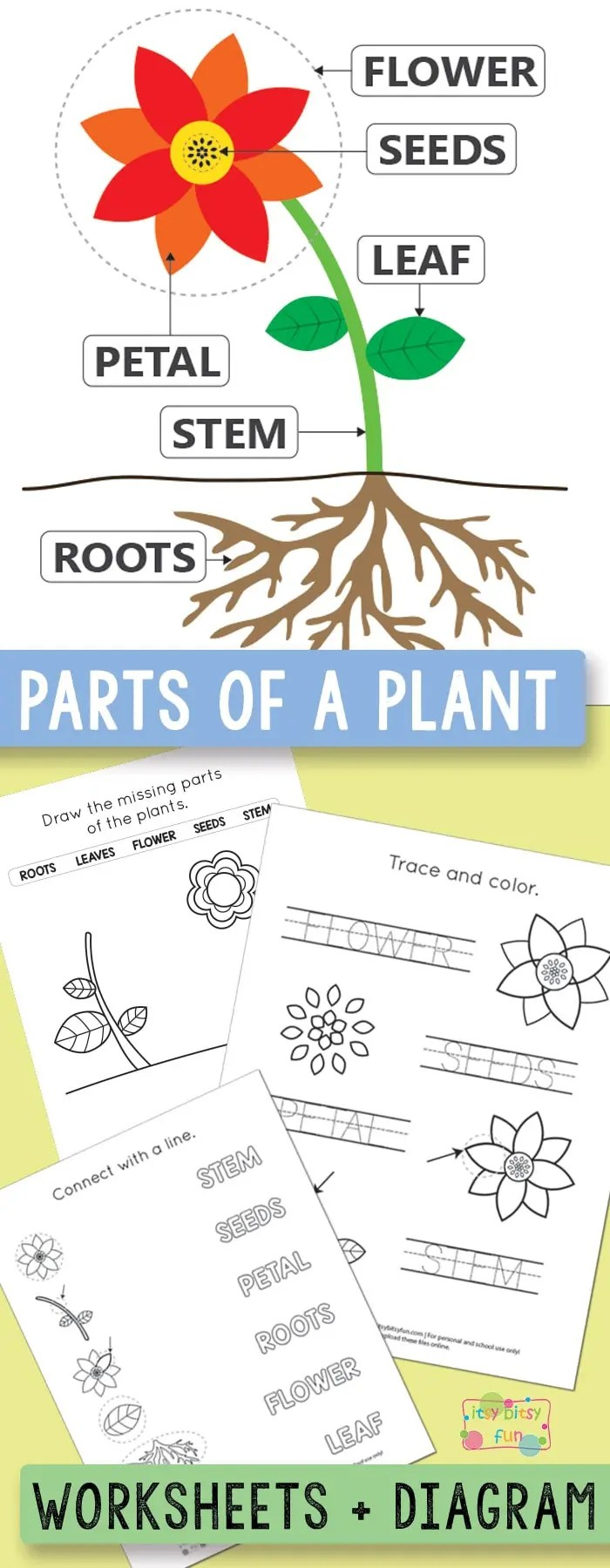 medium resolution of Free Printable Parts of a Plant Worksheets - itsybitsyfun.com