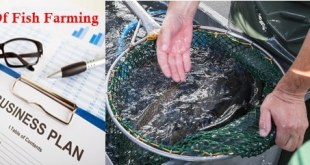 cost of starting fish farming