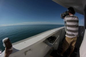 Juan Carlos Salinas looking for vaquitas in the gillnet free waters of the northern Gulf of California
