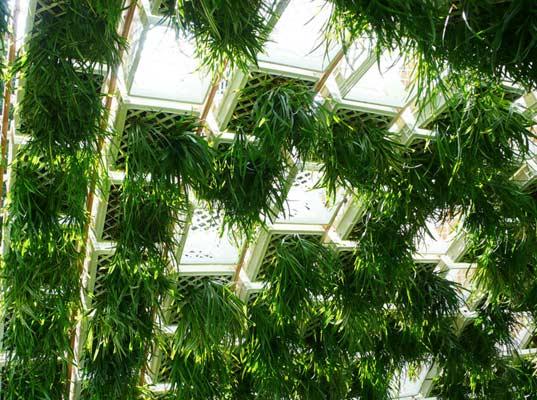 ไอเดียลดโลกร้อน ปลูกสวนแนวตั้งจากลังพลาสติก 14 - Green Wall