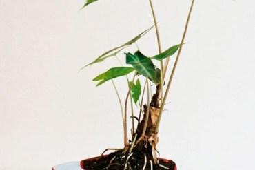 Plant Apparel..มาปลูกต้นไม้ในของใช้ใกล้ตัวกัน 26 - DIY