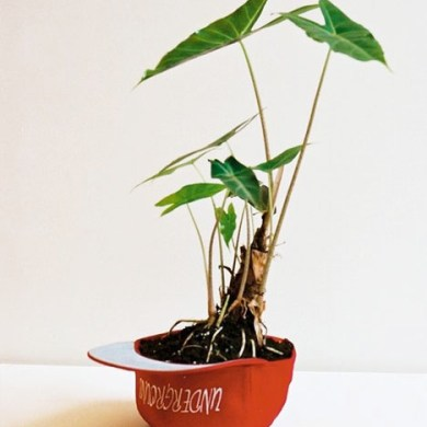 Plant Apparel..มาปลูกต้นไม้ในของใช้ใกล้ตัวกัน 15 - DIY