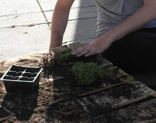 DIY. RECYCLED PALLET สู่สวนแนวตั้ง 21 - DIY