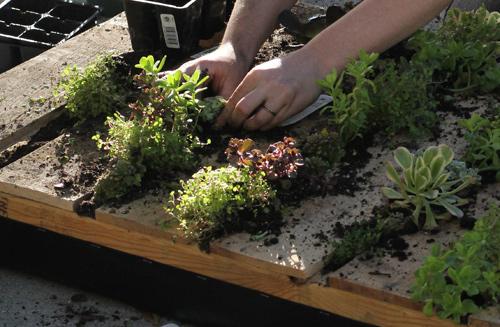 DIY. RECYCLED PALLET สู่สวนแนวตั้ง 12 - DIY