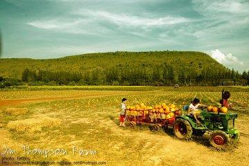 Into the JimThompson Farm 19 - Farm