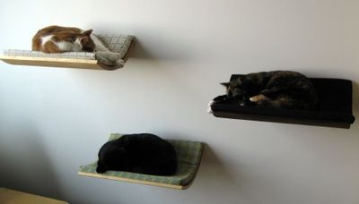 Floating Pet Beds ที่นอนลอยหนีน้ำท่วมสำหรับสัตว์เลี้ยง 22 - pet
