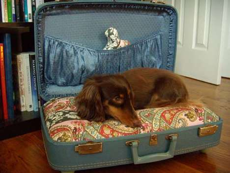 Pet's Bed-to-Go..เตียงนอนสัตว์เลี้ยงพร้อมเคลื่อนย้าย 13 - pet