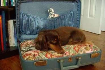 Pet's Bed-to-Go..เตียงนอนสัตว์เลี้ยงพร้อมเคลื่อนย้าย 22 - pet