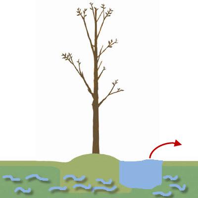 m garden 01 10 ช่วยชีวิตต้นไม้..หลังน้ำท่วม
