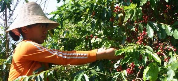 farm01 580x265 Shangrila Farms