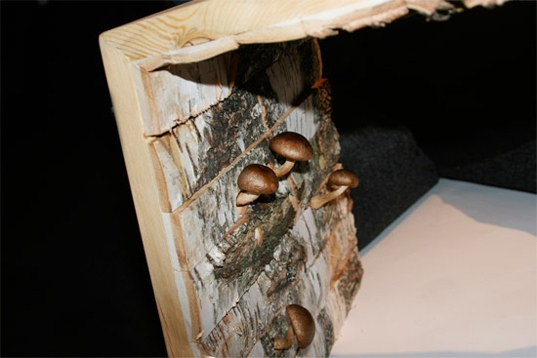 25550102 194212 เก้าอี้ปลูกเห็ด..mushrooms ate my furniture' chair.