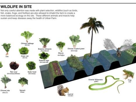 Urban Farm architectkidd 04 Wildlife in Site 466x350 URBAN FARM ความยั่งยืนเพื่อชีวิตที่ดีกว่าสำหรับมนุษย์ในอนาคต สวนเกษตร