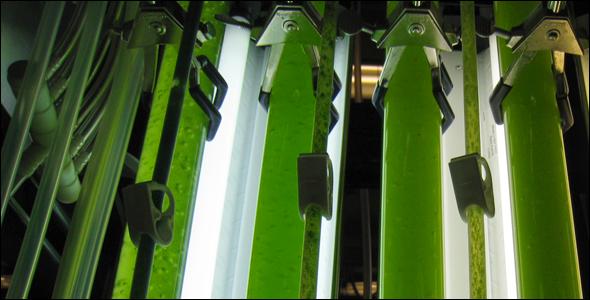 พลังงานจากสาหร่าย..อนาคตพลังงานของไทย 16 - biodiesel
