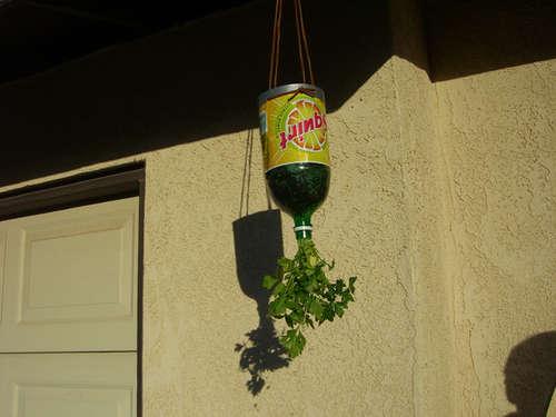 Go Green Upside Down Hanging Planters D.I.Y. กระถางกลับหัวจากขวดพลาสติกใช้แล้ว