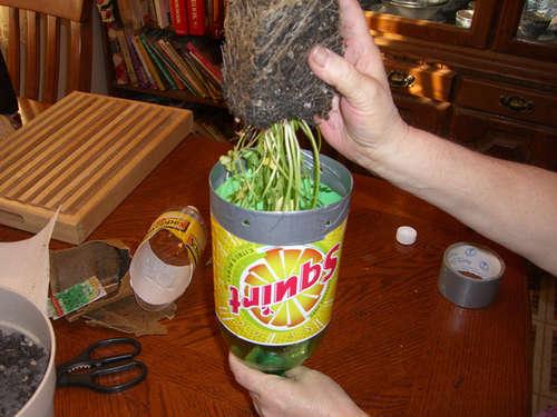 Insert your plant D.I.Y. กระถางกลับหัวจากขวดพลาสติกใช้แล้ว