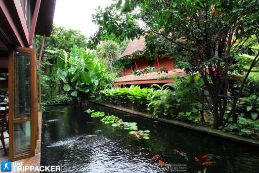 thetrippacker bkk jim thompson house n 043 524x350 พิพิธภัณฑ์บ้านไทย จิม ทอมป์สัน Jimthompson House