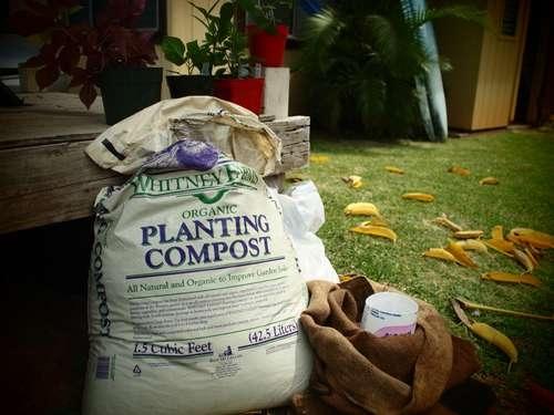 25550509 192755 Garden Sack สวนกระสอบ...ปลูกผักสวนครัว แบบไม่ต้องการพื้นที่