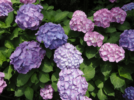 %name World travel with Hydrangea
