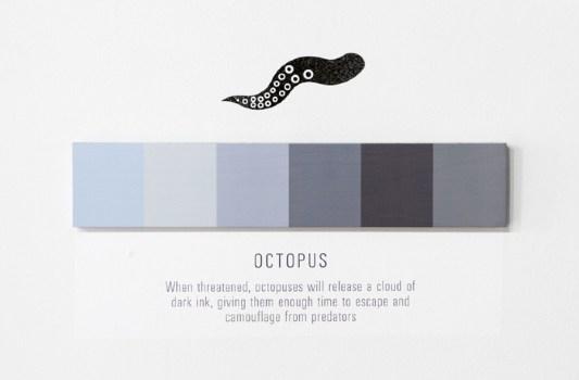 octopus 900 533x350 Shades of Change สีบอกอะไรได้มากกว่าที่คิด!!