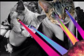 CATWANG แอปที่ใครๆก็เป็นแมว 2 - Catwang