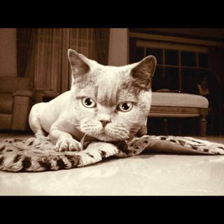 photo 3 CATWANG แอปที่ใครๆก็เป็นแมว
