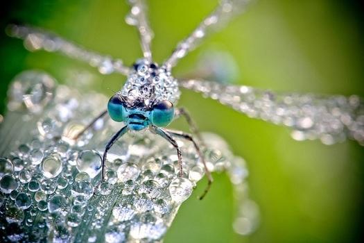 25550922 083326 ภาพ macro ชีวิตเล็กๆท่ามกลางหยดน้ำค้าง โดย David Chambon