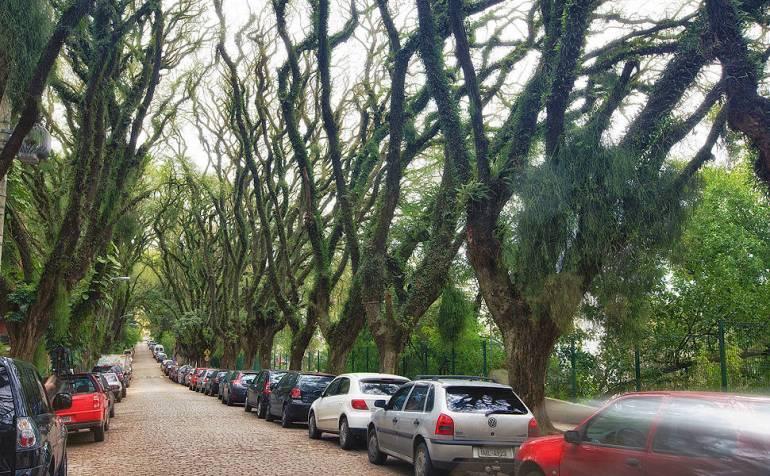 """ถนนสายต้นไม้ ที่ประเทศบราซิล """"Rua De Carvalho Goncal"""" 17 - tree"""