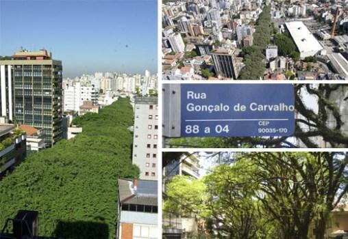 """ถนนสายต้นไม้ ที่ประเทศบราซิล """"Rua De Carvalho Goncal"""" 15 - tree"""