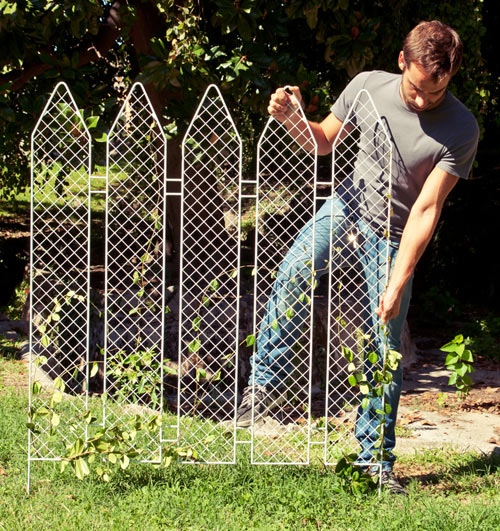 25551006 163723 Plant the fence...มาปลูกรั้วกันดีกว่า