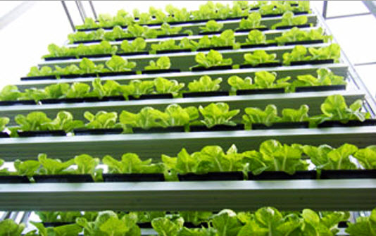 สิงคโปร์ ทำสวนผักแนวตั้งเพื่อการค้าเป็นครั้งแรกในโลก 17 - vertical farm