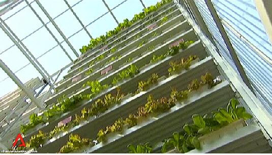 11 17 2012 8 15 18 PM สิงคโปร์ ทำสวนผักแนวตั้งเพื่อการค้าเป็นครั้งแรกในโลก