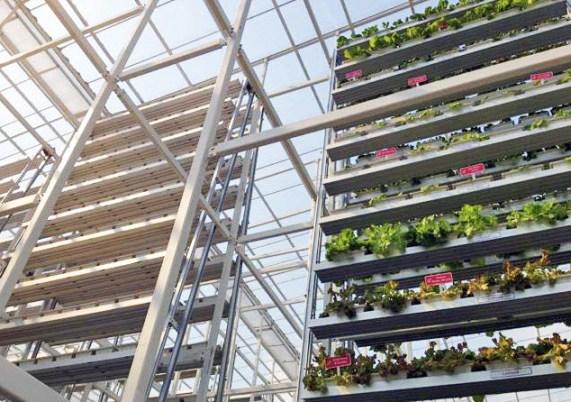 11 17 2012 8 15 47 PM สิงคโปร์ ทำสวนผักแนวตั้งเพื่อการค้าเป็นครั้งแรกในโลก