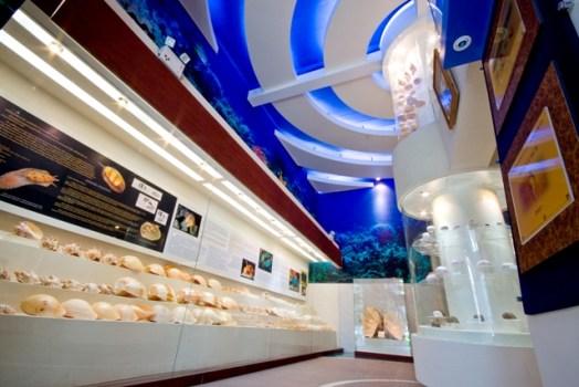 1275225 524x350 Bangkok Seashall Museum สู่โลกมหัศจรรย์ของเปลือกหอย ณ ถนนสีลม