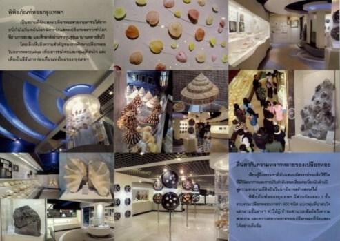 20120312170557YysZ 493x350 Bangkok Seashall Museum สู่โลกมหัศจรรย์ของเปลือกหอย ณ ถนนสีลม