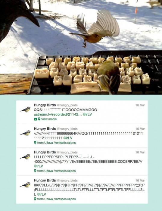 AMAZING! Real birds tweet on twitter 13 - hungry bird