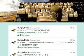 AMAZING! Real birds tweet on twitter 4 - hungry bird