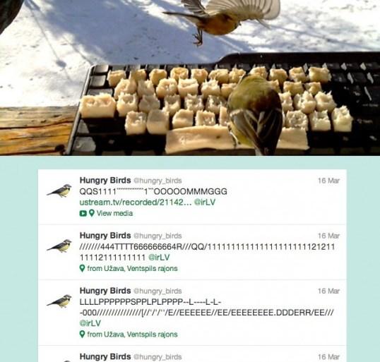 AMAZING! Real birds tweet on twitter 18 - twitter