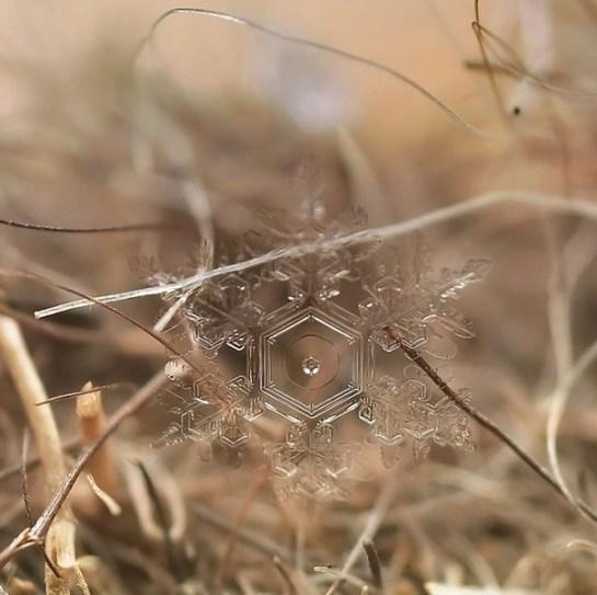 25551218 081905 ภาพถ่าย snowflake ของจริงในธรรมชาติ..ยกนิ้วให้กับความพยายามของช่างภาพ