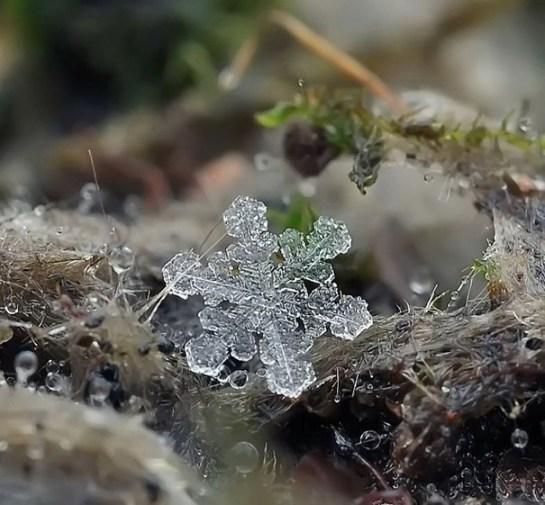 25551218 081917 ภาพถ่าย snowflake ของจริงในธรรมชาติ..ยกนิ้วให้กับความพยายามของช่างภาพ