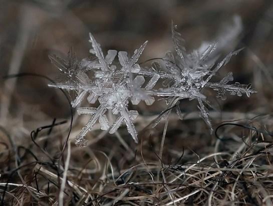 25551218 081924 ภาพถ่าย snowflake ของจริงในธรรมชาติ..ยกนิ้วให้กับความพยายามของช่างภาพ