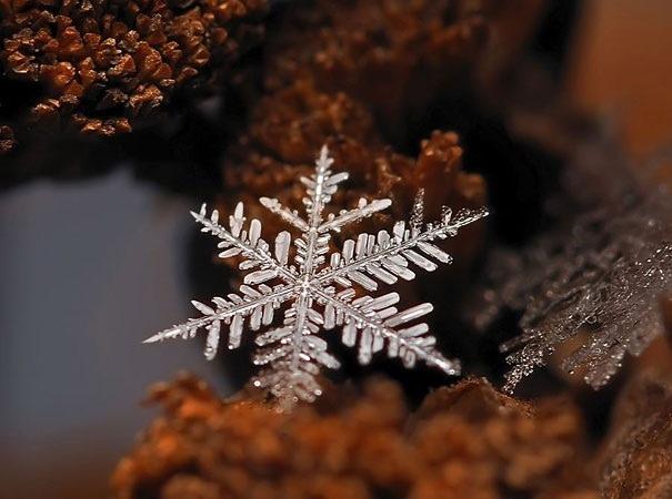 25551218 081954 ภาพถ่าย snowflake ของจริงในธรรมชาติ..ยกนิ้วให้กับความพยายามของช่างภาพ
