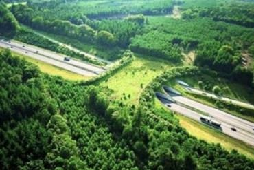 สะพานสีเขียว เพื่อสัตว์ป่าข้ามถนน 13 - Wildlife bridge