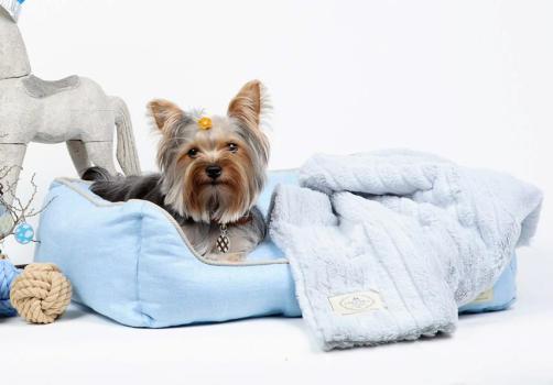 526473 228368657262197 2106389446 n 502x350 Coccola Pet Boutique แหล่งช็อปปิ้ง เพื่อเอาใจคนรักสัตว์เลี้ยง