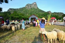 Swiss Sheep Farm (25)