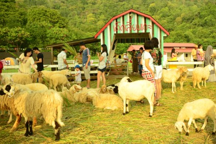 Swiss Sheep Farm (27)