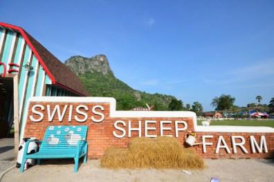 Swiss Sheep Farm (5)